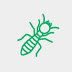 termita2